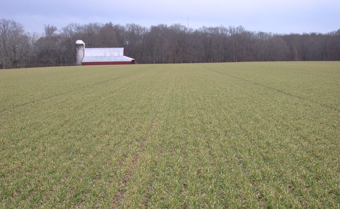COSAQUE certified seed in February 2016 (Tennessee)