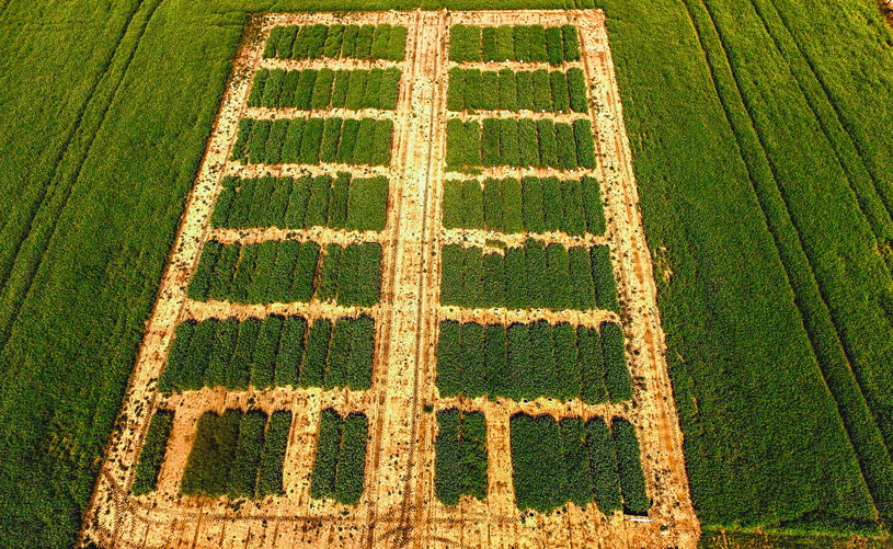 Drone view field pea research (North Carolina State University)