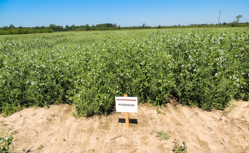Photosyntech field pea research (North Carolina State University)