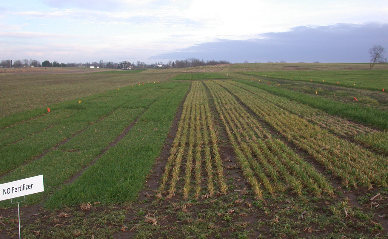 Small grain research resilience of rye (left) to sub-zero temperatures versus winter oats (right)